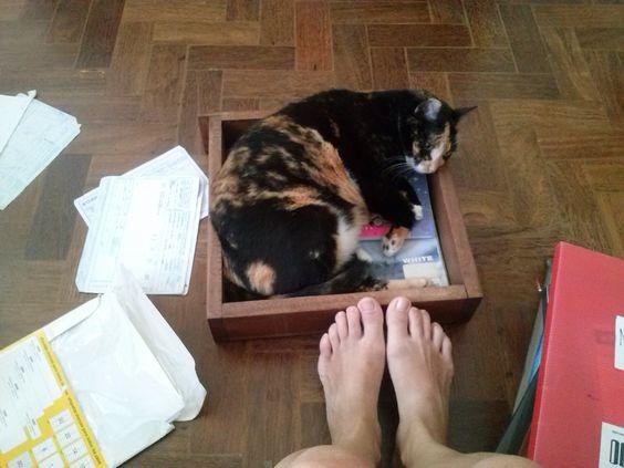 Conforto de gato