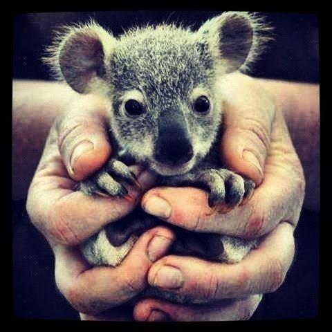 Little Aussie Fella