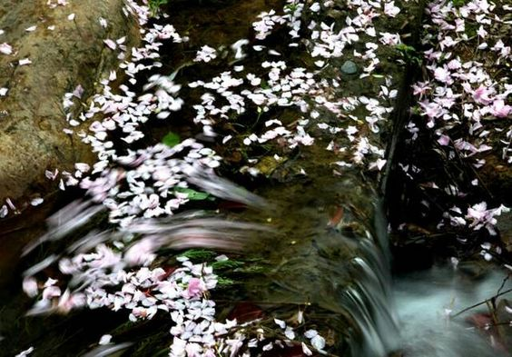 Water loves flowers