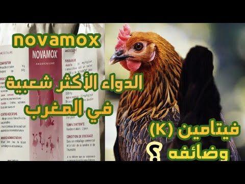 تربية الدواجن هل دوء Novamox جيد ويقي من سالمونيلا دور فيتامين K ومميزاته كتغدية يومية للدواجن Youtube Rooster Animals