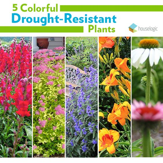 Bring vivid color to your yard, even in dry climates, with drought-resistant plants.