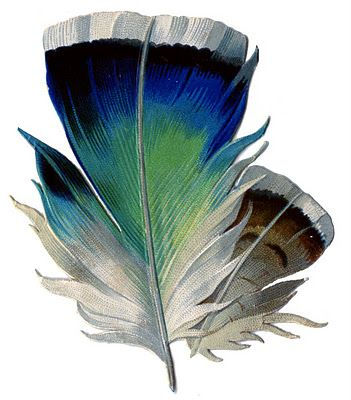 Vintage Graphic - Really Pretty Feather - The Graphics Fairy: