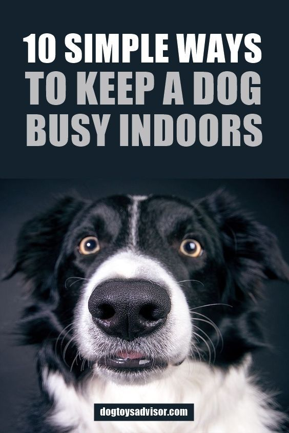 Most Pet Parents Lead Very Busy Lives With Jobs And Our Dogs Often
