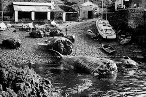 Baleeiros Açores