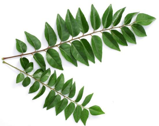Image result for Karapincha photo