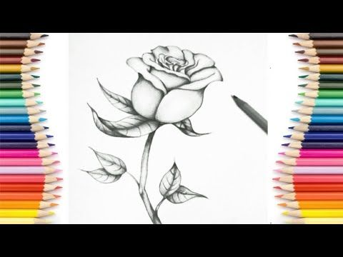 Easy Drawing How To Draw A Rose Step By Step Easy Cool Drawings Pencil Sketch Youtube Cool Drawings Easy Drawings Pencil Drawings