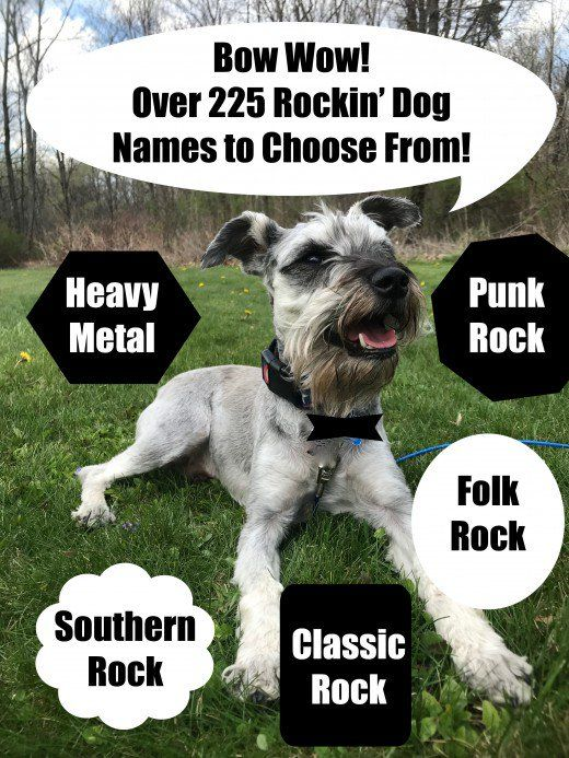 225 Cool And Unique Dog Names Inspired By Rock Music Songs Dog Names Dog Names Unique Rock Music