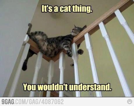 Cat things...