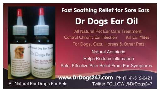Dr Dogs Ear Oil (not just for dogs!)  Natural treatment for ear infections in dogs, cats, horses, cows, birds, pigs, prize winning rabbits and more.  Fast, safe, soothing relief for ear ache pain. Natural antibiotic fights ear symptoms without chemicals or pesticides. Inexpensive to use, effective for controlling sore red ears.