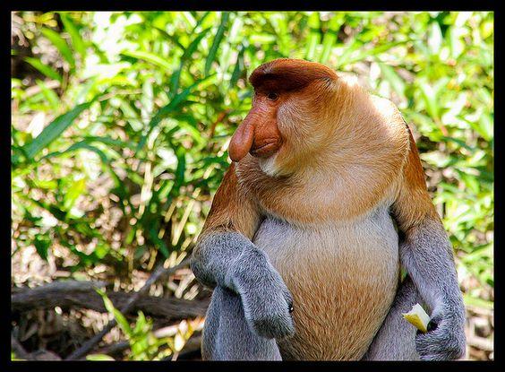 キナバル自然公園-の世界遺産