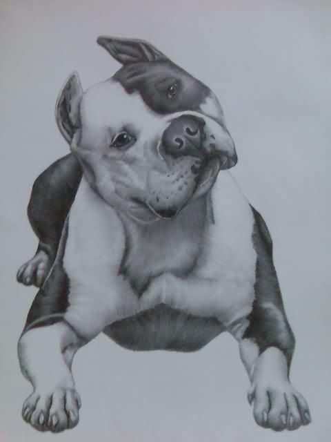 Pitbull Dog Tattoo Sample Tattoobite Com Pitbull Drawing