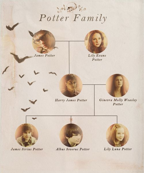 With Prongs And Flower Hp Harry Potter Ginny Weasley Harry Potter Family Tree Albus Severus Potter
