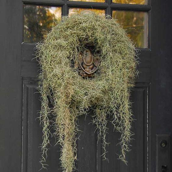 DIY Weekend: Spanish Moss Wreath—the perfect combination of Halloween and harvest | Garden & Gun