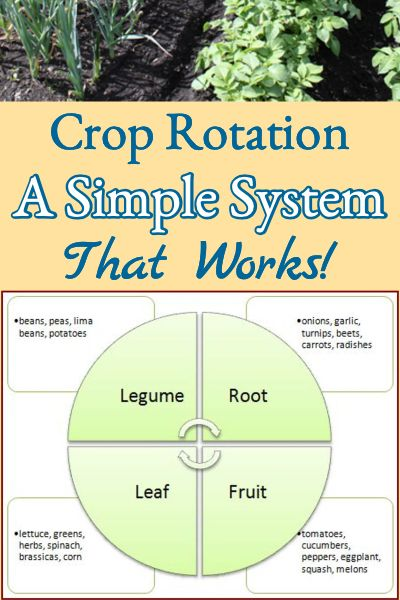 Garden Crop Rotation A Simple System Better Hens Gardens In 2020 Crop Rotation Easy Garden Ideas Landscaping Organic Gardening