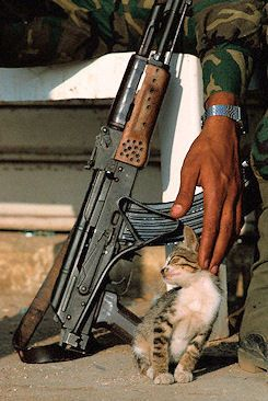 """We love life whenever we can""  June 1982, Beirut, Lebanon — Palestinian Soldier Stroking a Kitten"