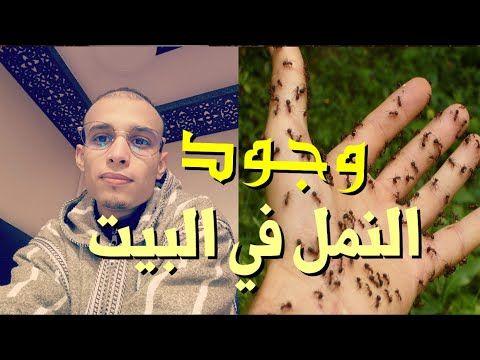سبب وجود النمل في البيت إحذر الامر خطير الراقي المغربي زهير آدم Good Morning Quotes Islamic Phrases Morning Quotes