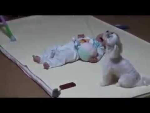 Mom Is Stressed Her Baby Won T Stop Crying But The Dog S Solution