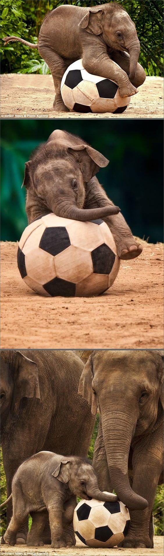 Luk Chai, a baby elephant born, 2009 in the Taronga Zoo, Sydney. Photo: Renee Doyle
