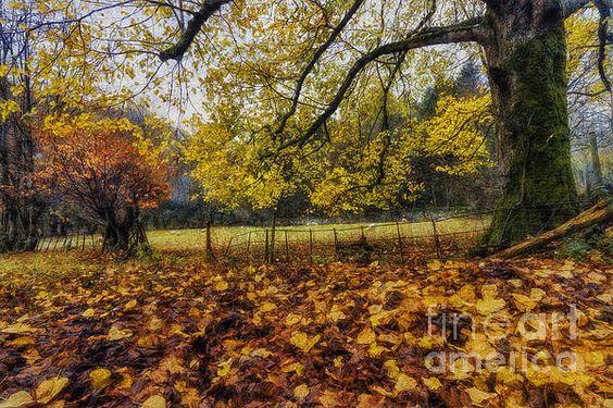 Under The Autumn Trees