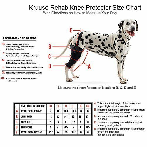 Picture Of A Dog S Knee