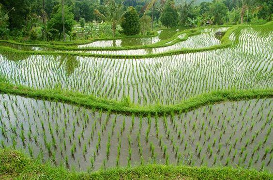 Routard.com : toutes les informations pour préparer votre voyage Bali. Carte Bali, formalité, météo, activités, itinéraire, photos Bali, hôtel Bali, séjour, actualité, tourisme, vidéos Bali