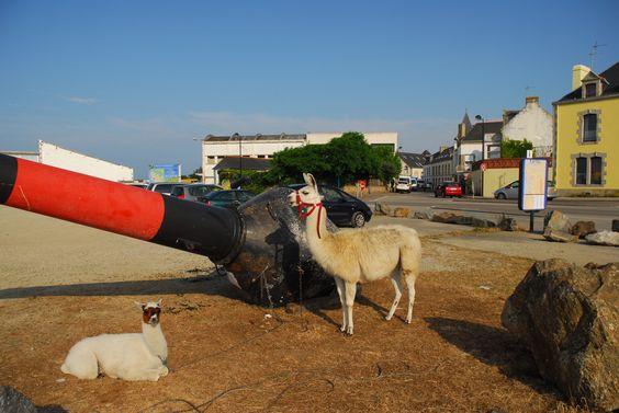 Concours photo 2013, Le Grand Joseph''Le Cirque''