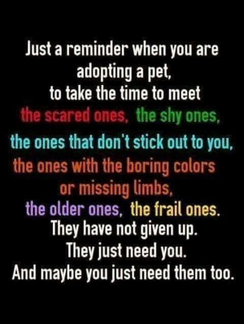 Pin By Kathy Morin On Love In 2020 Rescue Quotes Dog Quotes Pets