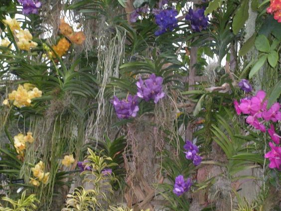 Pin by Jeanette Rickman on Chicago Botanical Gardens Orchid Show
