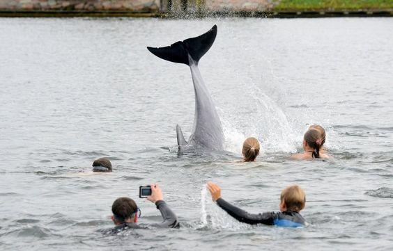 Ostsee: Kinder schwimmen mit Delfin in Kieler Förde - SPIEGEL ONLINE - Panorama