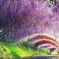 Kegon Falls, Nikko, Tochigi, Japan, 華厳の滝, 日光, 栃木, 日本