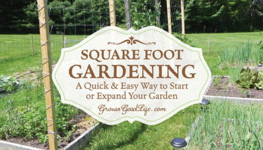Square Foot Garden: A Quick & Easy Way to Begin a Garden