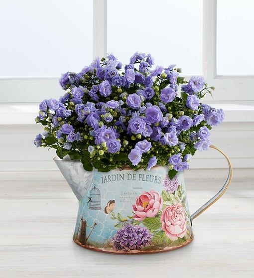 Purple Campanula In 2020 Mothers Day Plants Plant Gifts Spring Blooms