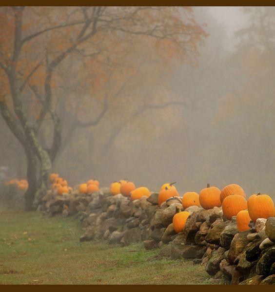 Pumpkins in the Autumn mist.