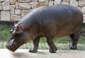 Bildergebnis für zoo profil