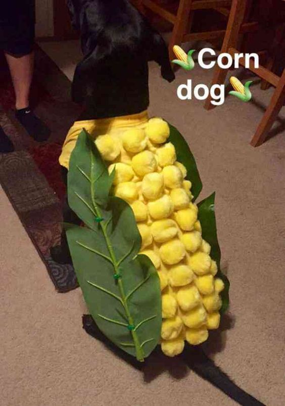 We've gathered the best of the best dog Halloween costumes and cat Halloween costumes to help you celebrate your favorite spooky holiday with your entire family - pets included! Check out our picks of the 40 best Halloween costumes for pets. #halloween #halloweencostumes #dogcostume #doghalloweencostume #catcostumes #halloweencostumesforpets