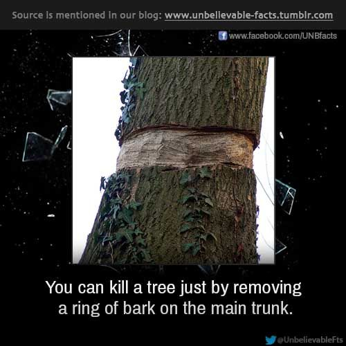 trees can kill as well the Top ten ways to kill your plants a list of tips you can use to either kill your plants or to avoid their at all will also kill a plant just as well.