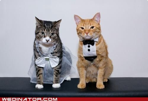 crazy cat wedding.  silly info: Pudding, the daughter of Tidbit and an Unknown Tomcat Somebody Forgot to Neuter of San Francisco, was married Saturday evening to Boots, the son of Mr. Sniffles of Annapolis, Md. and his wife Pookie-Ookie. It was a small, ridiculous ceremony.