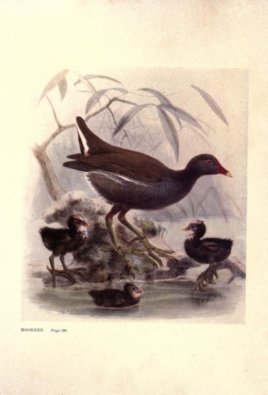 Talks about birds / - Biodiversity Heritage Library