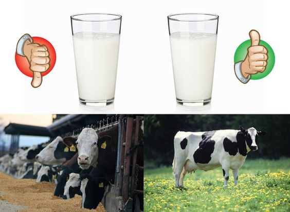 milk-cows-thumbsup-thumbsdown