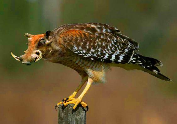 warthog  falcon