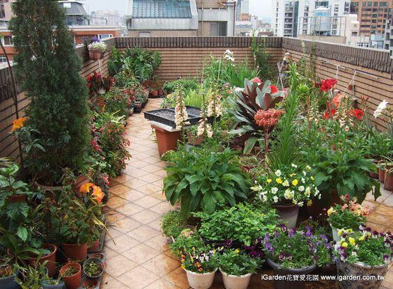 2013年3月 iGarden 頂樓花園的一角