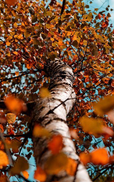 Autumn Approached by Viktor Avdejev <3