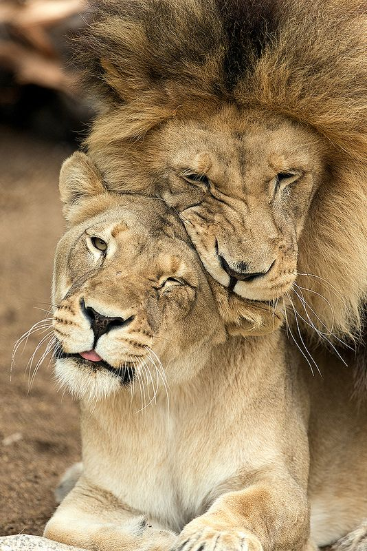 M'bari whispering sweet nothings in Etosha's ear .... errr showing some #love. Photo by Darrell Ybarrondo.