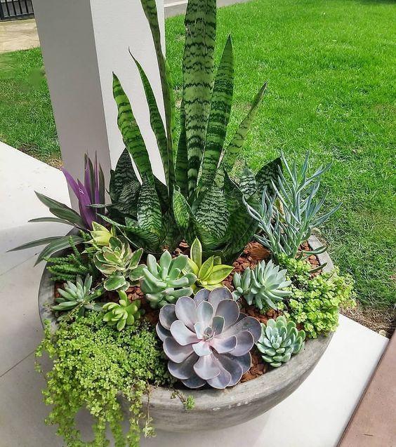 Cactos e suculentas: 3 passos essenciais para cuidar dessas plantas miniatura
