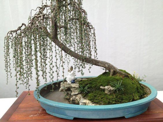 Weeping penjing landscape (with area for water) small Proportionate plants complete the relaxing scene: