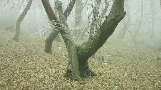 Hoia Baciu – La foresta infestata