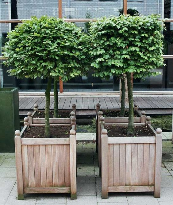 10 diy awesome and interesting ideas for great gardens 7 for Most beautiful wood