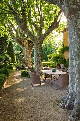 Planes gravel patio and terrace on pinterest - Trees for shade in small spaces concept ...