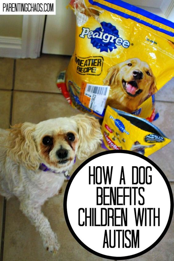 How a shelter dog can become your child's best friend #PedigreeGives #ad