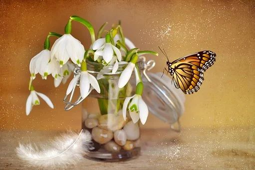 200+ Free Lily Of The Valley & Spring Photos - Pixabay